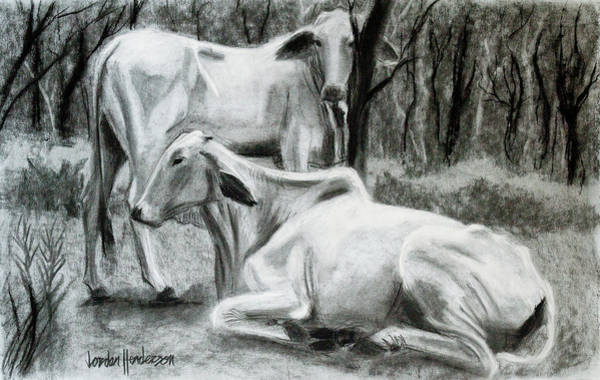 Black And White Cow Drawings Fine Art America