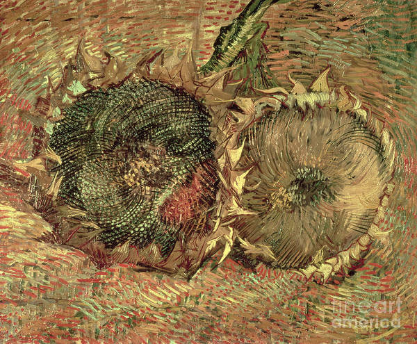 Wall Art - Painting - Two Cut Sunflowers, 1887 by Vincent Van Gogh