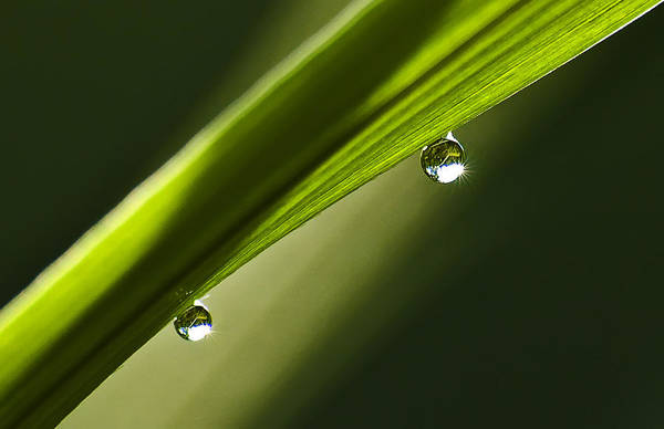 Two Dew Drops On A Blade Of Grass Art Print by Michael Whitaker