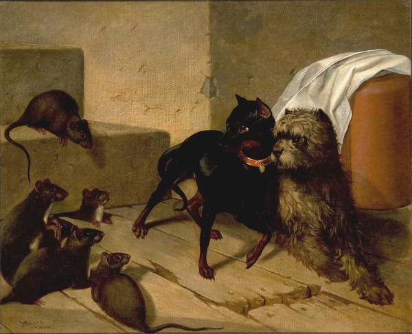 Wall Art - Painting - Two Dogs Cowering Before Rats by MotionAge Designs