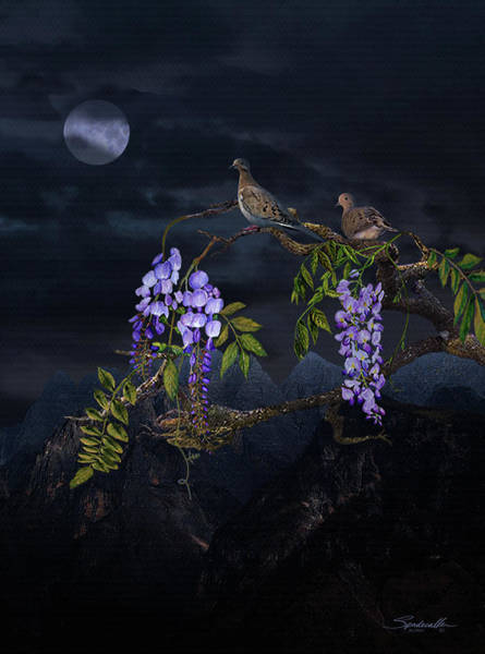 Dove Digital Art - Mourning Doves In Moonlight by M Spadecaller