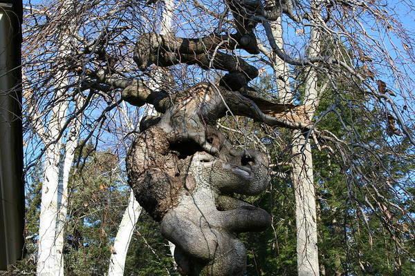 Two Elephants In A Tree Art Print