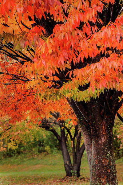 Photograph - Two Fall Trees by Don Johnson