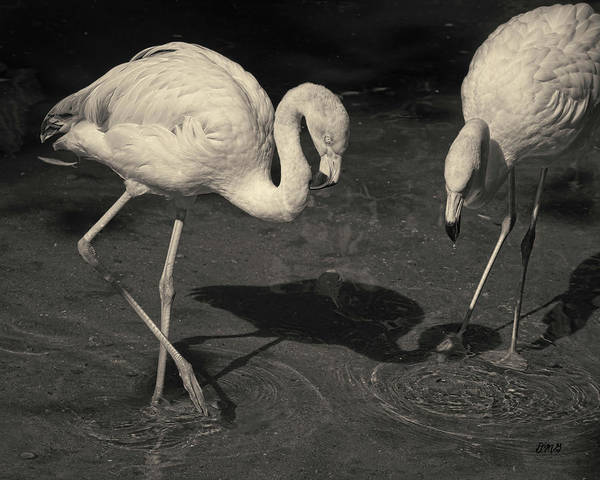 Photograph - Two Flamingos Toned by David Gordon