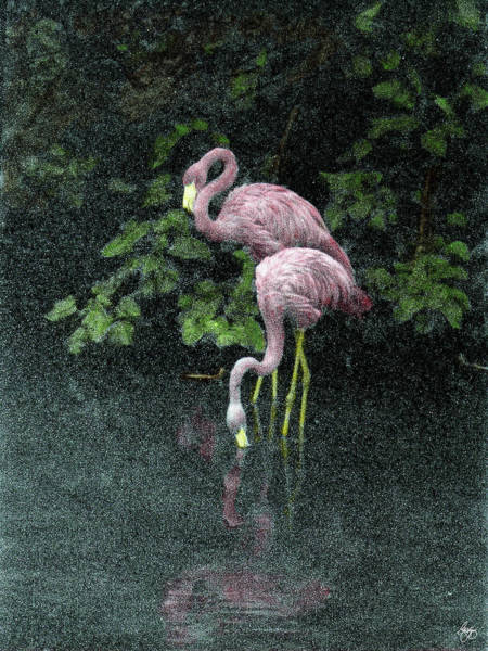 Photograph - Two Flamingos by Wayne King