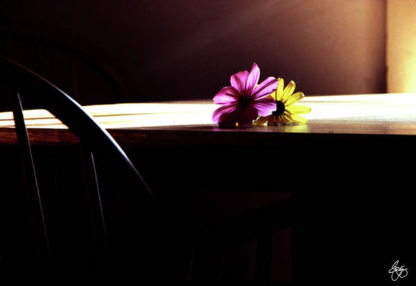 Photograph - Two Flowerheads In Late Afternoon Light by Wayne King