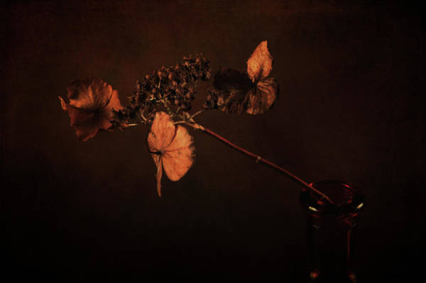 Photograph - Two Flowers In One by Randi Grace Nilsberg