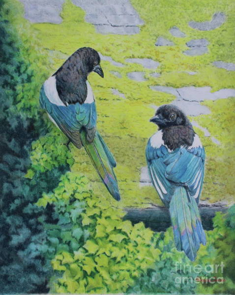 Magpies Drawing - Two For Joy Magpie Portrait by Elaine Jones