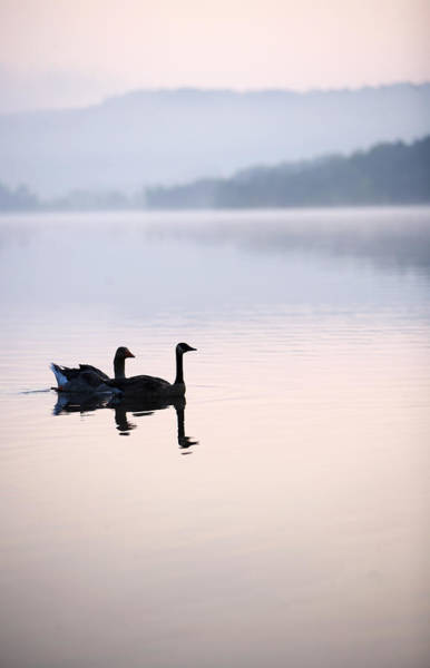 Two Birds Photograph - Two Geese On Lake With Fog And Forested by Gillham Studios