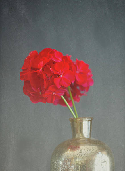 Photograph - Two Geraniums  by Sue Collura