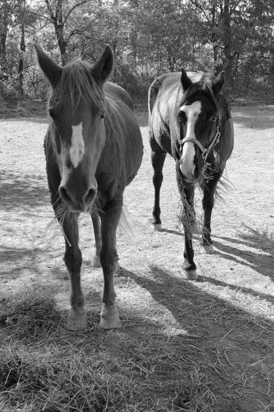Photograph - Two Horses by Angela Murdock