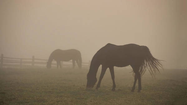 Wall Art - Photograph - Two Horses In The Fog - Widener Farms by Bill Cannon