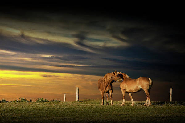 Photograph - Two Horses On Prince Edward Island by Randall Nyhof