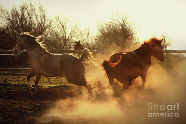 Photograph - Two Horses Running In Paddock by Dimitar Hristov