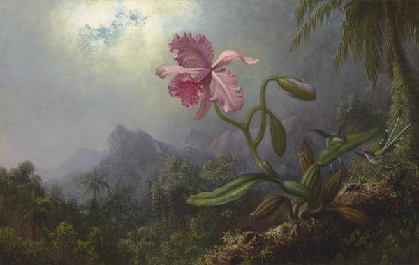 Wall Art - Painting - Two Hummingbirds With An Orchid by Martin Johnson Heade