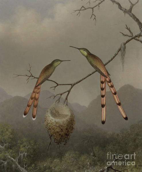 Wall Art - Painting - Two Hummingbirds With Their Young by Martin Johnson Heade