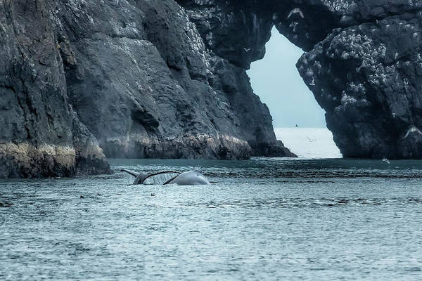 Photograph - Two Humpback Whales In Resurrection Bay by Belinda Greb