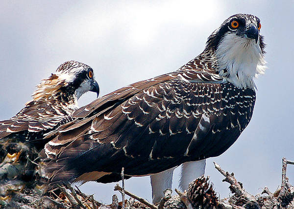 Photograph - Two In The Nest by Donna Proctor