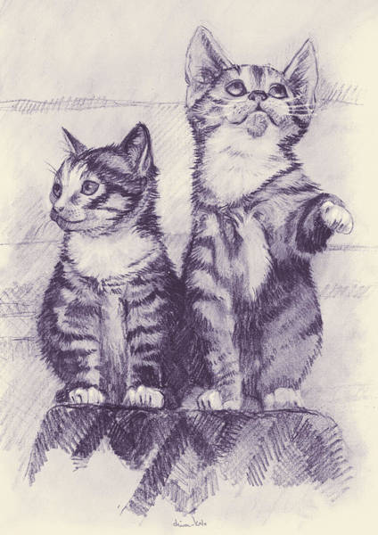 Furry Drawing - Two Kittens by Dina Kalo