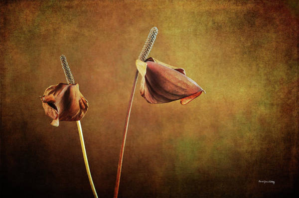 Photograph - Two Lillies In Late Bloom by Randi Grace Nilsberg