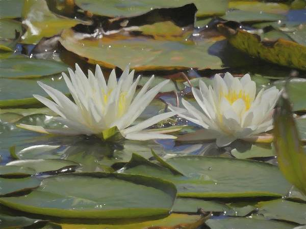 Photograph - Two Lillypads Blossoms by Rusty R Smith