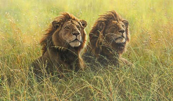 Painting - Two Male Lions by Alan M Hunt