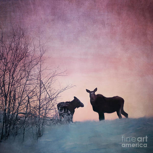 Wall Art - Photograph - Two Moose Sunset by Priska Wettstein