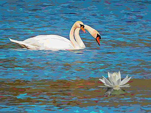 Digital Art - Two Mute Swans Together. by Rusty R Smith