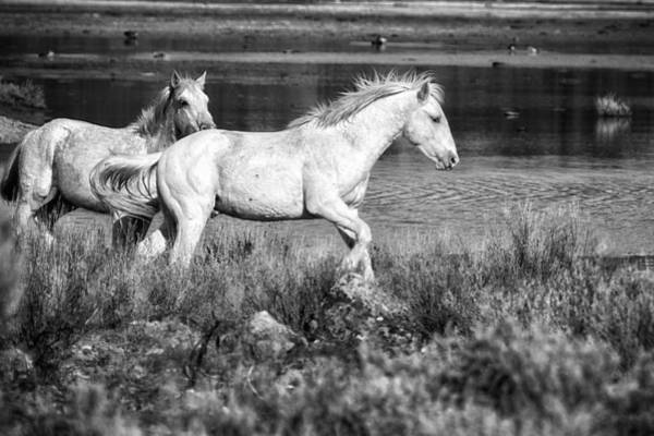 Photograph - Two Of A Kind Bw by Belinda Greb