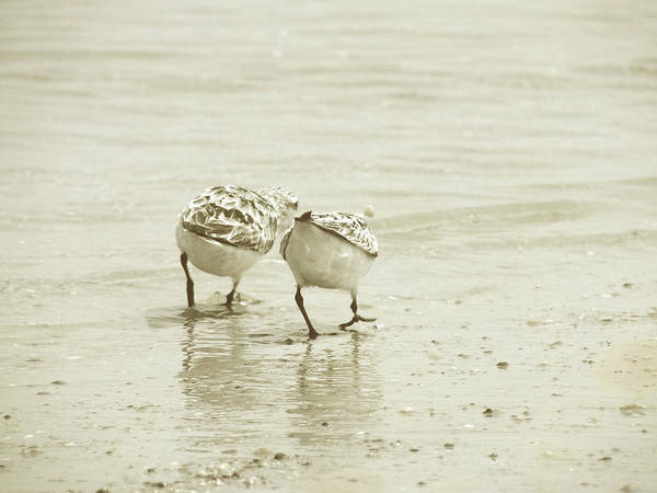 Photograph - Two Of A Kind by JAMART Photography