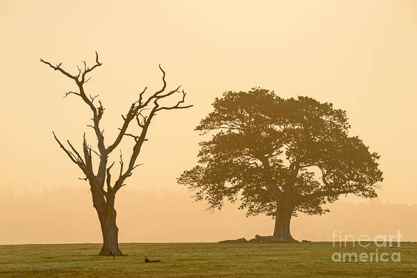 Wall Art - Photograph - Two Old by Richard Thomas