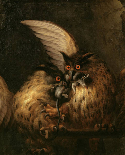 Barn Owl Painting - Two Owls Fighting Over A Rat by Hans Georg Muller