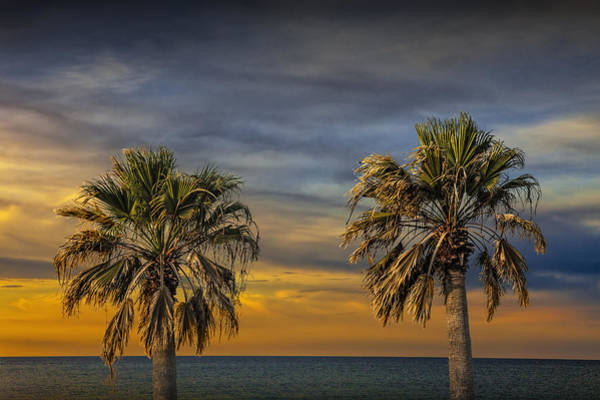 Photograph - Two Palm Trees At Sunrise By Aransas Pass Harbor In Texas by Randall Nyhof