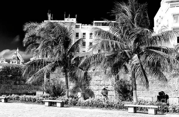Photograph - Two Palm Trees In Cartagena by John Rizzuto
