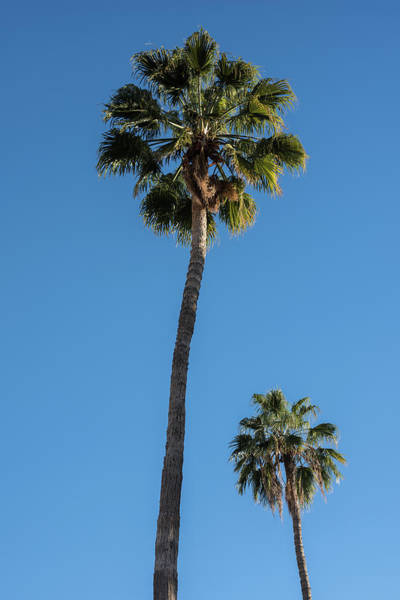 Wall Art - Photograph - Two Palms by Steve Gadomski