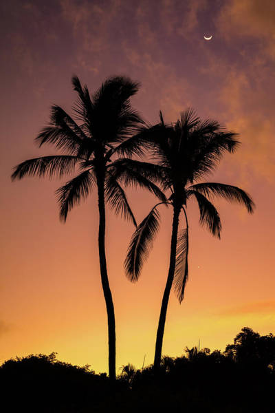 Photograph - Two Palms Sunrise by Pierre Leclerc Photography