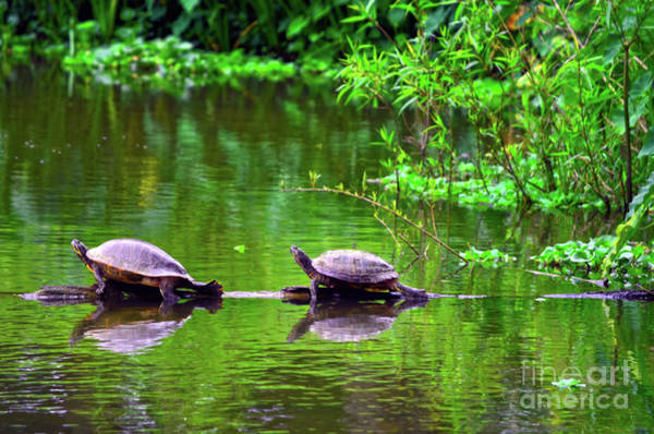 Photograph - Two Peas In A Pod On A Log by Spade Photo