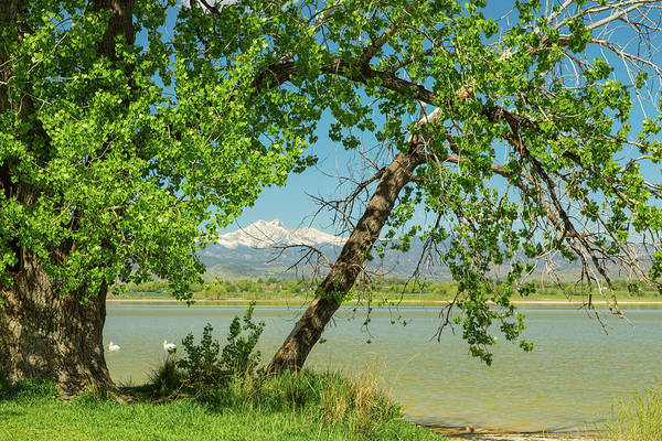 Photograph - Two Pelican Twin Peaks Springtime View by James BO Insogna