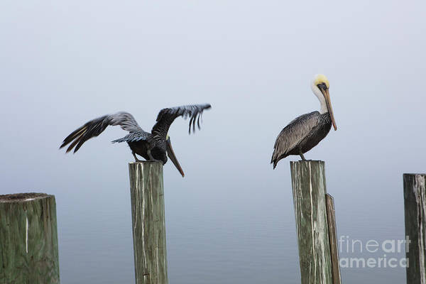 Wall Art - Photograph - Two Pelicans by Jon Neidert