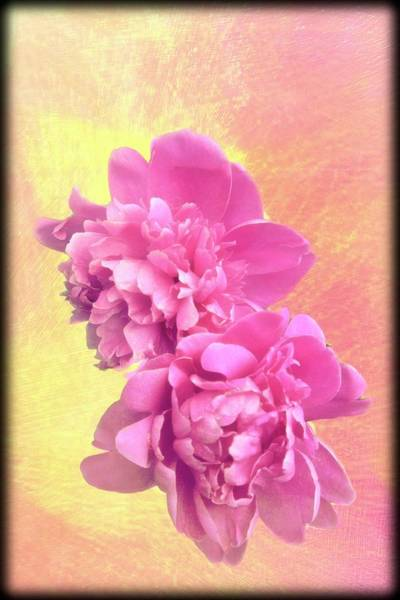 Digital Art - Two Pink Flowers by Rusty R Smith