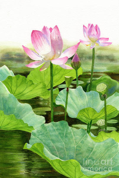 Lotus Seed Wall Art - Painting - Two Pink Lotus Blossoms With Bud by Sharon Freeman