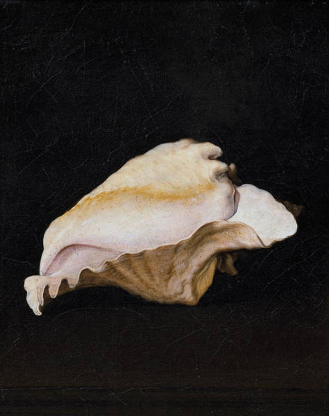 Arthropods Painting - Two Shells-detail-1 by Filippo Napoletano