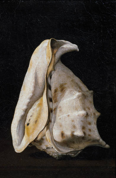 Arthropods Painting - Two Shells-detail-2 by Filippo Napoletano