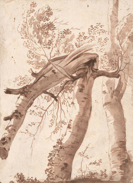 Drawing - Two Silver Birches, The Front One Fallen by Nicolas Poussin