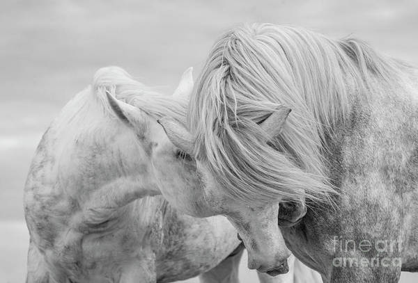 Wall Art - Photograph - Two Stallions Connect by Carol Walker