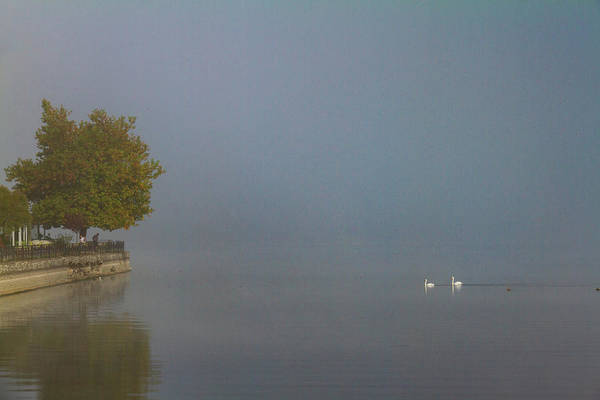 Nature Wall Art - Photograph - Two Swans And A Tree On The Misty Lake by Iordanis Pallikaras