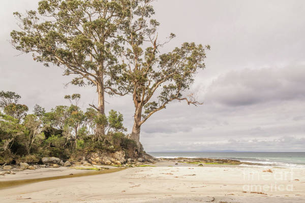Photograph - Two Tree Point 2 by Werner Padarin