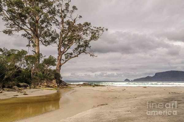 Photograph - Two Tree Point by Werner Padarin