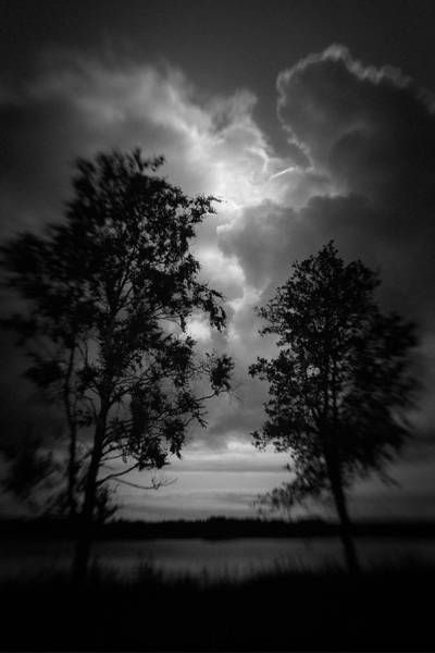 Photograph - Two Trees #9327 by Andrey Godyaykin