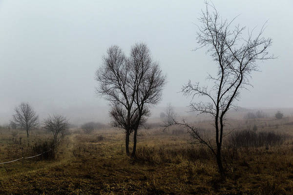 Photograph - Two Trees In The Fog by Pete Hendley